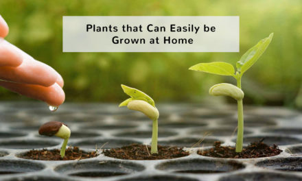 Plants that Can Easily be Grown at Home